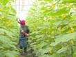 北宁省发展高经济价值的农场经济模式
