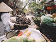 越南获得世界旅游大奖6个奖项的提名