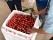 越南通过老街口岸出口7000多吨荔枝