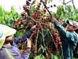 咖啡是越南出口阿尔及利亚的第一大产品