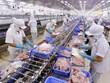 越南具备向美国出口鲶鱼资质  FSIS确认越南鲶鱼监管系统与美国等效