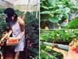 农场体验游——林同省的特色旅游产品