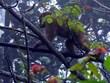 宣光省释放一只猕猴回归自然
