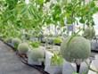 越南推动在农业中应用生物技术