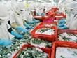 今年越南虾类产品出口额可下降4.4%