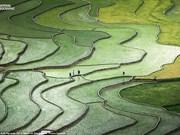 越南安沛省梯田照片列入2015年国家地理全球摄影大赛精选作品名录