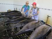 日本专家同越南平定省渔民一起出海捕捞
