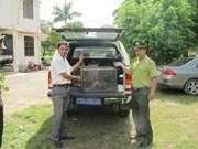 广平省两只珍稀普通猕猴获救护