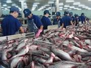 越南查鱼全年出口额预计达17亿美元