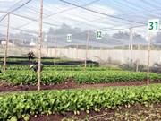 越南首个蔬菜农场荣获美国和欧盟的有机认证标准