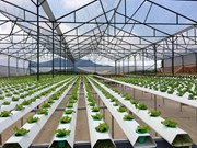 高科技农业——西原地区经济可持续发展的方向