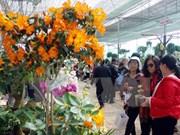 2015年大叻花卉节将于12月底举行