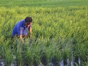 越南与巴基斯坦加强经济合作