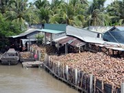 槟知省椰子制品出口额占本省出口总额的30%
