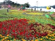 2015年第六次大叻花卉节:大叻市共接待游客50万人次