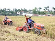 越南农业部门重组结构以融入国际和加快发展