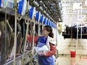 越南在俄展开工业规模化奶牛养殖及乳制品加工项目