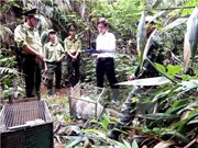 越南将承办有关打击野生动物非法交易第三次会议