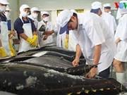 日本通过拍卖活动收购越南平定省金枪鱼
