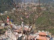 2016年边疆春天活动在高平省举行