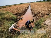 越南政府总理对九龙江三角洲海水入侵紧急应对措施做出批示