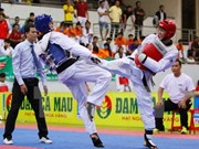 200多名运动员参加2016年越南全国踢拳道俱乐部锦标赛