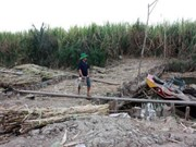 发展伙伴和赞助商就越南应对干旱与海水入侵建言献策