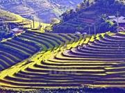越南西北地区各省份为2017年国家旅游年作出积极准备