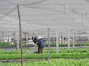 越美促进农林水产领域的合作与贸易往来