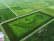 奇特的水稻越南地图吸引不少游客