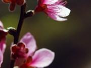 河内十二月份之十二花季