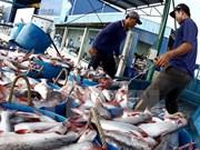 越南查鱼与巴沙鱼的养殖操作规程相当先进
