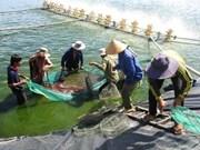 欧盟协助越南构建越南虾类可持续发展价值链