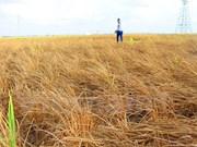 日本向越南旱区灾民提供250万美元援助资金