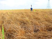 越南政府拨款援助受旱灾严重地区