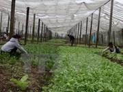 2017-2020年越南力争促使农业企业数量年均增长10%