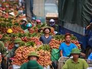 越南产品地里标志申请登记需符合越南—欧盟自贸协定的承诺
