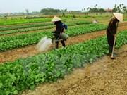 越南多措并举提高农业职业技能培训效果