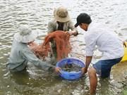 越南加大水产养殖中的抗生素、禁用药物控管力度