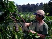 2016-2017年度全国咖啡产量或将减少