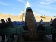 越南富安省最大木屑加工厂正式投入运营