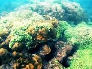 来昏果岛潜水观赏珊瑚礁