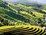 德国电视一台制作有关越南风土人情的电视节目