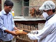 越南全国各地主动防范畜禽疾病