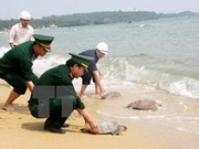 西宁省扣留从柬埔寨非法走私入境的66只乌龟