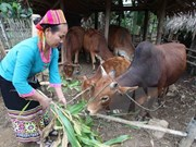 越南可持续减贫实现千年发展目标