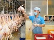 越南拟对日本出口鸡肉加工产品