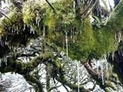 高平省高山出现结霜冰挂景象(组图)