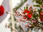 日本樱花在李太祖花园盛开 (组图)