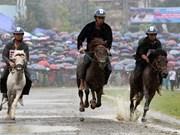 热闹非凡的越南2018年北河传统赛马比赛(组图)